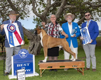 Boxer Best in Show