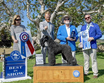Kerry Blue Best in Show